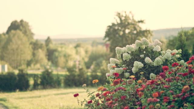 色とりどりの花で裏庭庭 - 花壇点の映像素材/bロール