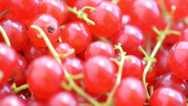 background of berries of red currant - currant stock videos & royalty-free footage