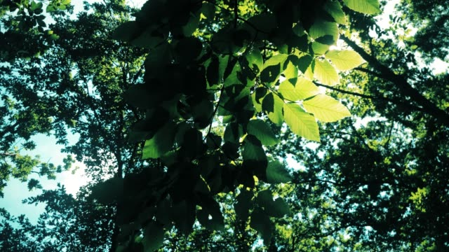 background of green leaves in a forest - branch plant part stock videos & royalty-free footage