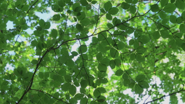 background of green leaves in a forest - foglia video stock e b–roll