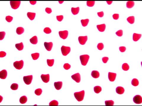 background of raspberries - brambleberry stock videos & royalty-free footage