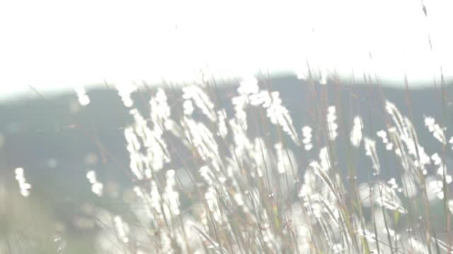 ラングドックでブドウ畑の背景 - つる草点の映像素材/bロール