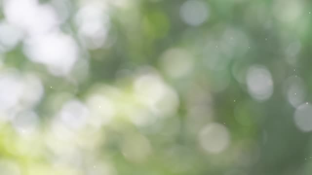 background with beautiful green bokeh circles with dust - lush stock videos & royalty-free footage