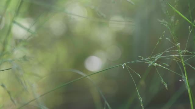 Achtergrond met groene gras van de zomer en de zon