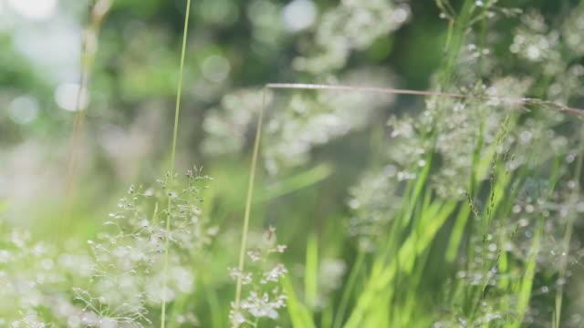 vídeos de stock, filmes e b-roll de fundo com grama verde verão e sol - chegada