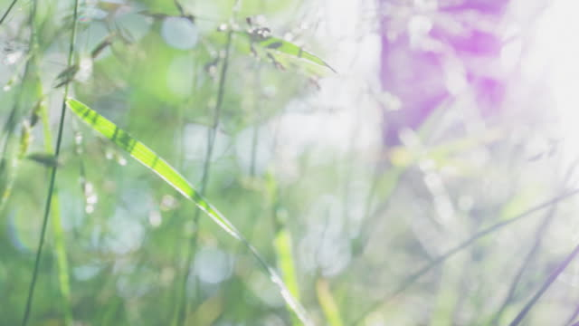 Background with Green Summer Grass and Sunshine