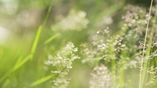 background with green summer grass and sunshine - summer stock videos & royalty-free footage