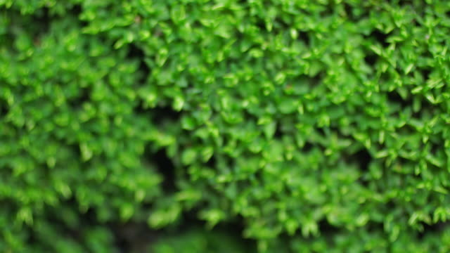background with small green tree dolly shot - dolly shot stock videos & royalty-free footage