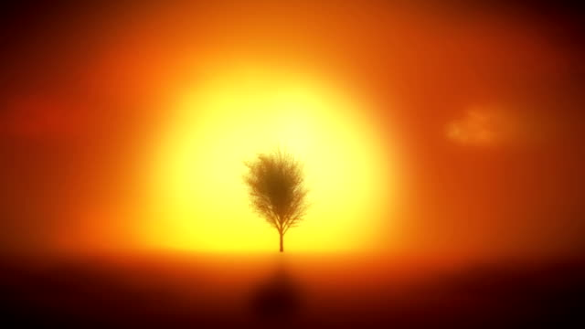 background with tree growing, sunset, reflection in water. - origins stock videos and b-roll footage