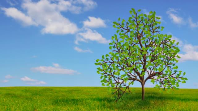 背景に木の成長率 - 枝点の映像素材/bロール
