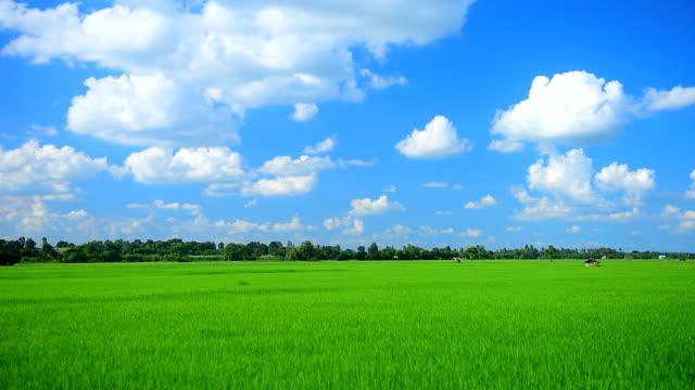 vídeos y material grabado en eventos de stock de fondos movimiento nubes granja hermosa - pradera
