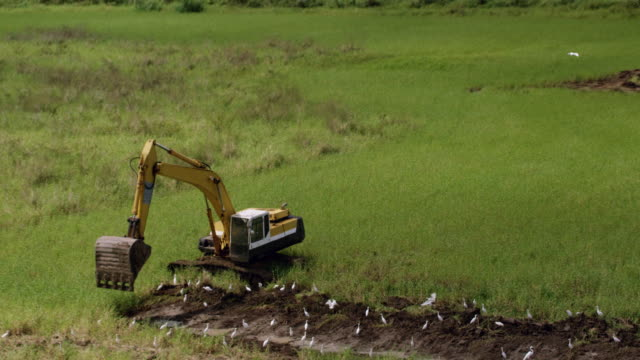 ws zo aerial pov backhoe digging soil, great egret flying around / aguada, puerto rico, united states  - digging stock videos & royalty-free footage