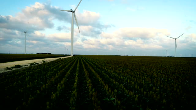 backing up over corn rows at wind farm - corpus christi texas stock videos & royalty-free footage