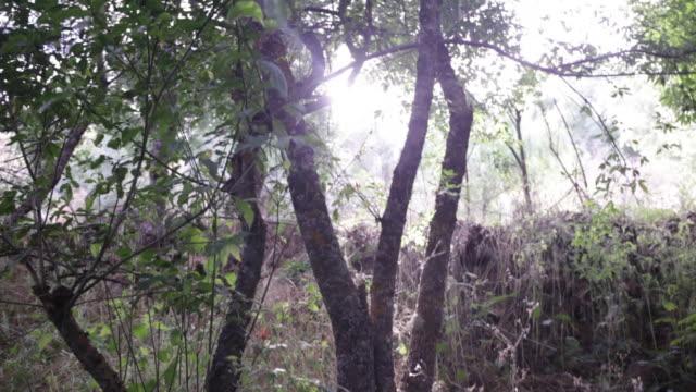 backlist against trees. tilt movement. - segovia stock videos & royalty-free footage
