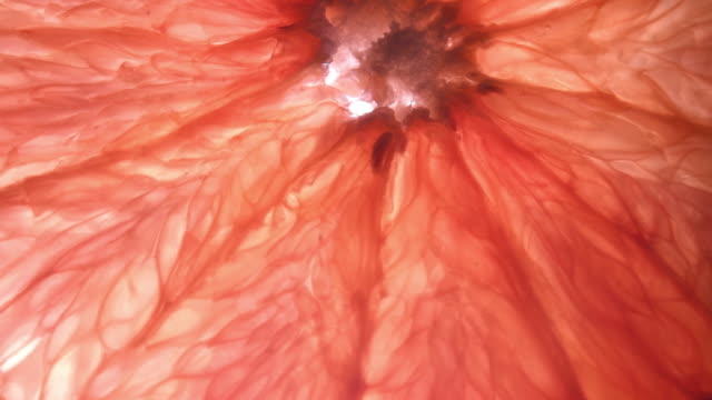 backlit texture of grapefruit flesh slowly moving - ascorbic acid stock videos & royalty-free footage