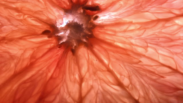 backlit texture of grapefruit flesh slowly moving - citrus fruit stock videos & royalty-free footage