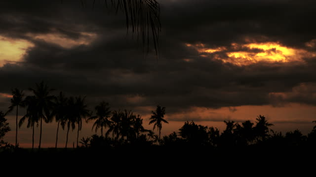Backlit timelapse video van de zonsondergang achter kokospalmen in Azië