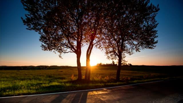 CRANE UP: Backlit Tree