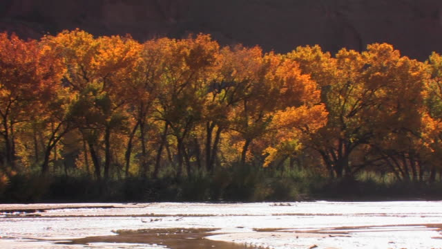 ms pan backlit trees with autumn leaves on edge of shallow river/ canyon de chelly national monument, arizona - canyon de chelly stock videos & royalty-free footage