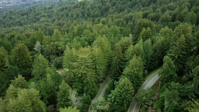 Backroads cut through hillside forest outside San Jose, California, aerial
