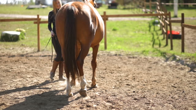 backside view: female equestrian practices gymnastics with brown horse during training - 雄馬点の映像素材/bロール