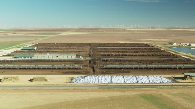 vidéos et rushes de backwards drone shot of feed lot on texas cattle ranch - ranch
