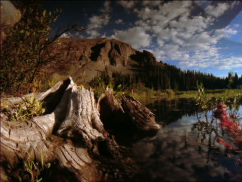 backwards point of view past driftwood + over mountain lake with time lapse clouds above / colorado rocky mountains - 流木点の映像素材/bロール