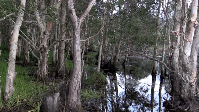 backwater with trees and grasses at reservoire - backwater stock videos & royalty-free footage