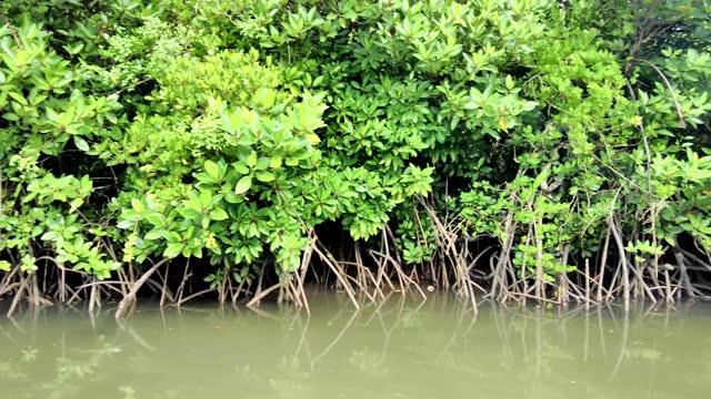 バックウォーターズの旅 - 逆水点の映像素材/bロール