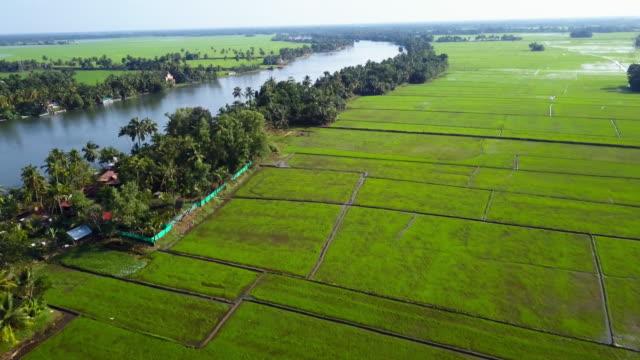 backwaters , kerala, india - uppdämt vatten bildbanksvideor och videomaterial från bakom kulisserna