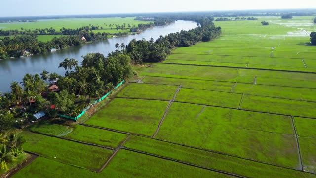backwaters , kerala, india - paddy field stock videos & royalty-free footage