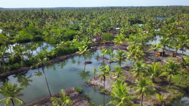 backwaters monroe island, kerala, india - 逆水点の映像素材/bロール