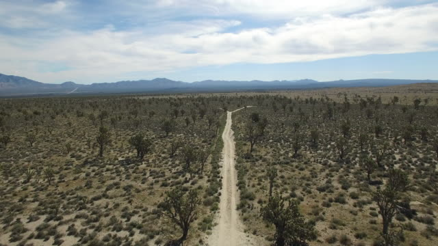 Backwords over dirt road in Joshua tree forest - Drone Aerial video 4K Joshua Tree National Forest, Desert barren land, no people with remote location cactus California desert, Mojave desert, with extreme terrain 4K Nature/Wildlife/Weather