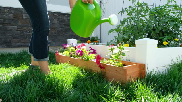 backyard gardening - lawn stock videos & royalty-free footage