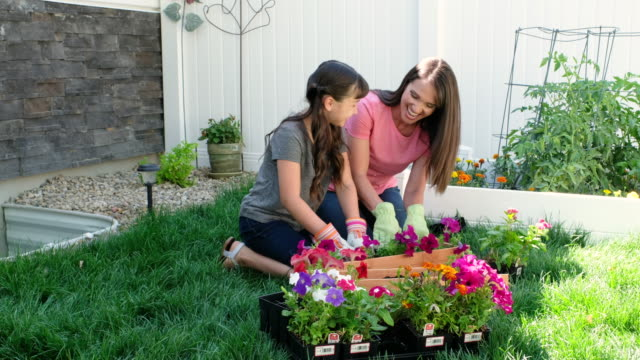 backyard gardening - landscaped stock videos & royalty-free footage