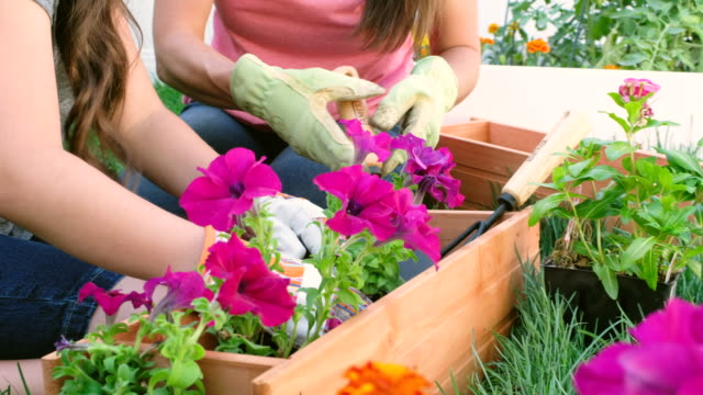 backyard gardening - springtime stock videos & royalty-free footage