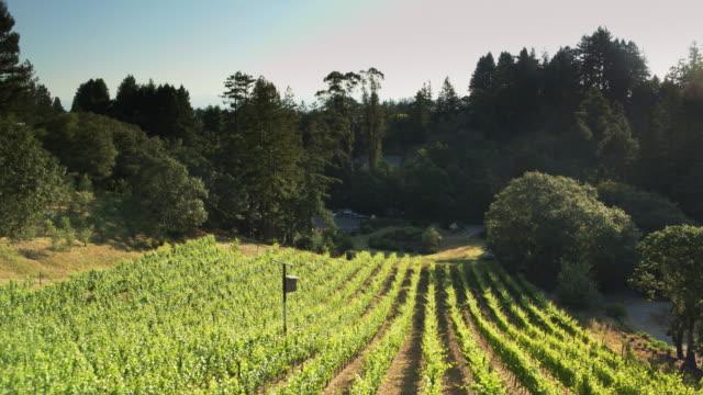 Backyard Winery - Drone Shot