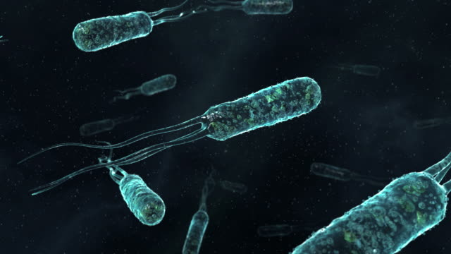 bacteria, animation. these bacteria have flagella extending from one end, which are beaten for propulsion - bacterium stock videos and b-roll footage