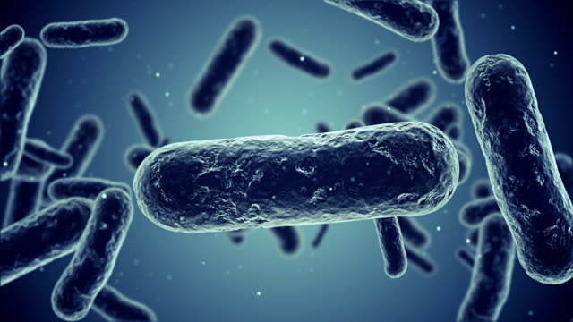 bakterien-animation - eschericia coli stock-videos und b-roll-filmmaterial
