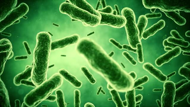 bakterien animaton - vignettierung stock-videos und b-roll-filmmaterial