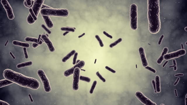 bacteria animaton - virus stock videos and b-roll footage