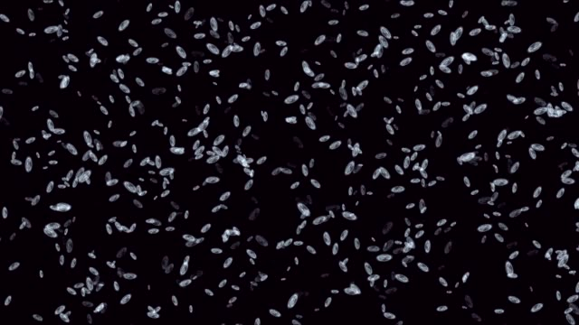 bacteria background render - bacterium stock videos & royalty-free footage