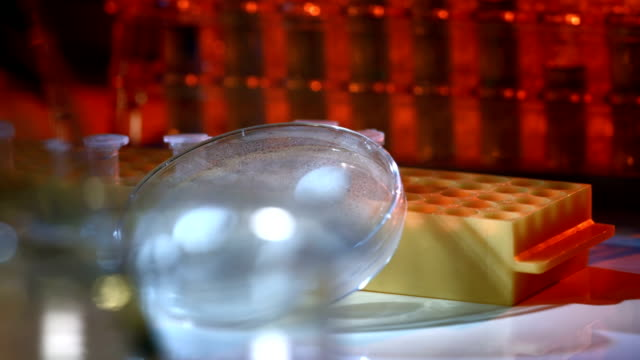hd :dolly バクテリア文化、シャーレ - 微生物学点の映像素材/bロール