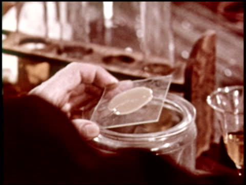 bacteria: friend and foe - 5 of 10 - see other clips from this shoot 2319 stock videos & royalty-free footage