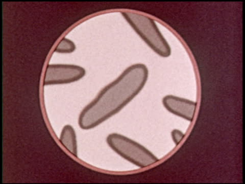 bacteria: friend and foe - 9 of 10 - see other clips from this shoot 2319 stock videos & royalty-free footage