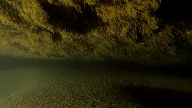 bacteria on underwater cave walls - micro organism stock videos & royalty-free footage