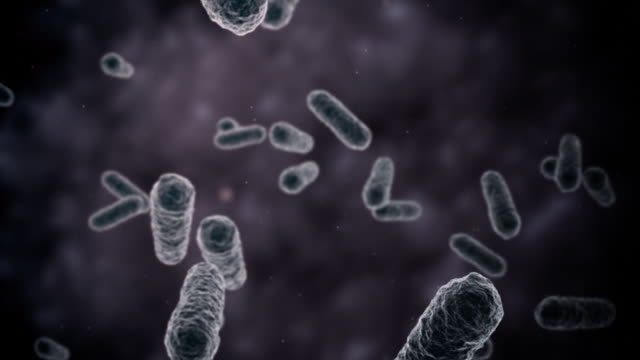 bacteria seen by electron microscope 1080p loop - bacterium stock videos & royalty-free footage