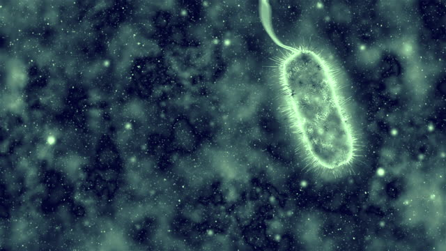bacteria - bacterium stock videos & royalty-free footage