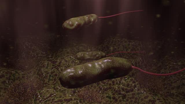 細菌 - ピロリ菌点の映像素材/bロール