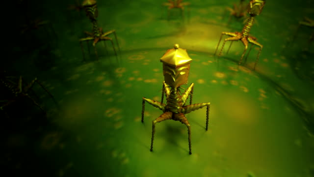 bacteriophage infecting bacterium - rna stock videos & royalty-free footage